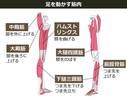 足を動かす筋肉