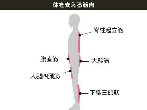 体を支える筋肉